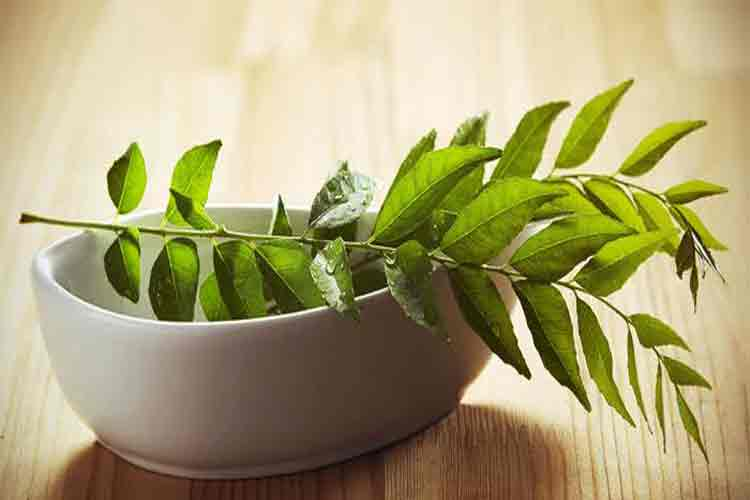 Hidden Benefits of Curry Leaves