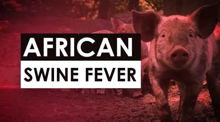 African Swine Fever in India